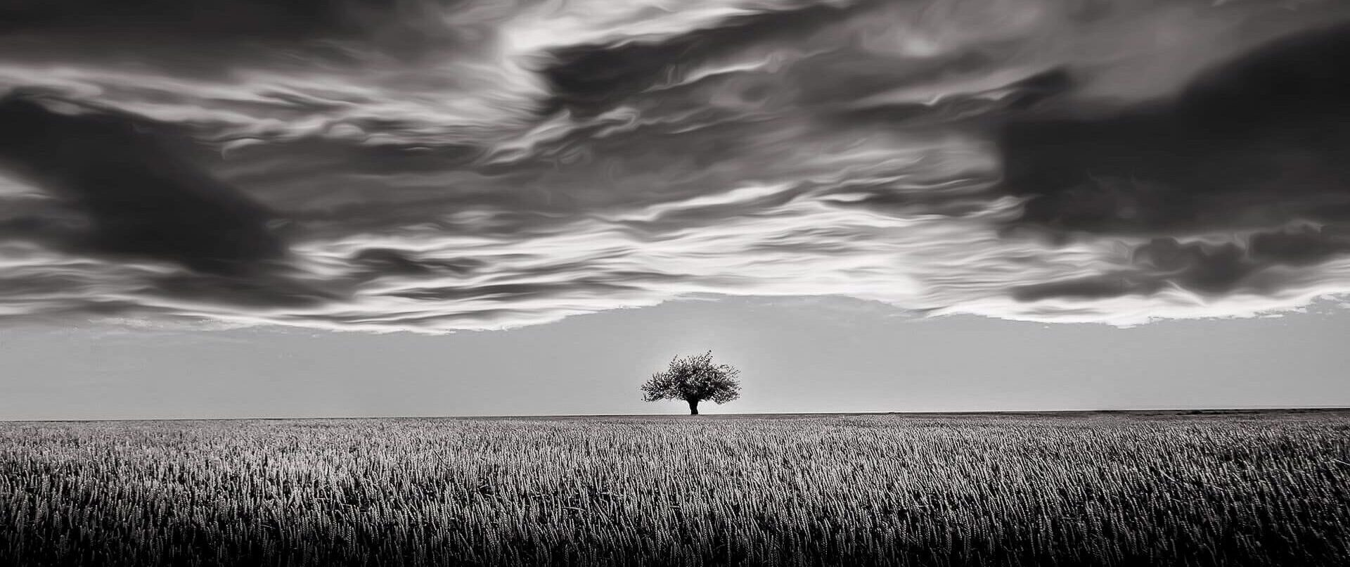 Tree at the End of the World